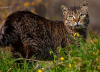 feral cat repellent nj - feral cats control service new jersey